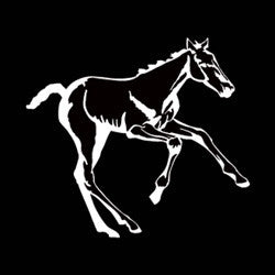 "(MBDV8200) ""Foal High Performance Vinyl Decal"