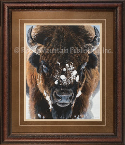 "(RMP-TI001) ""Winter Warrior"" Western Buffalo Framed Print"