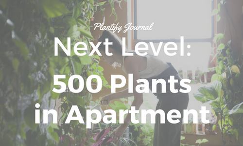Next Level: 500 Plants in one Apartment