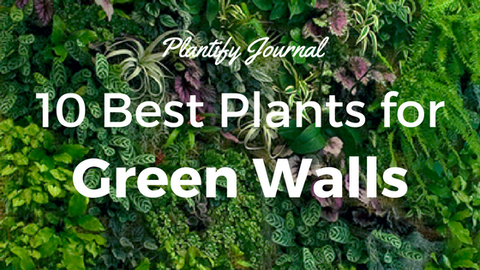10 Best Ornamental Plants for Your Green Wall
