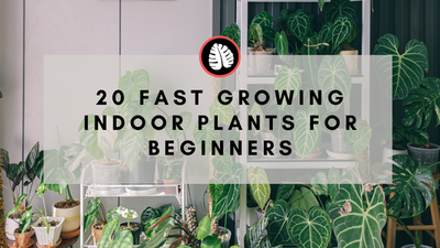 House Plant Fertilising Basics