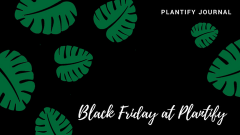 Black Friday 2017 at Plantify