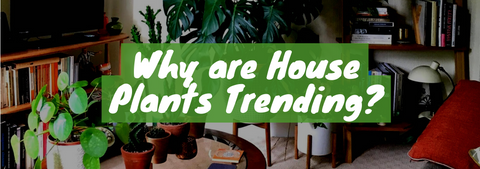 Why Are Indoor Plants Trending?