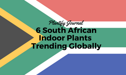 6 South African Indoor Plants Trending Globally