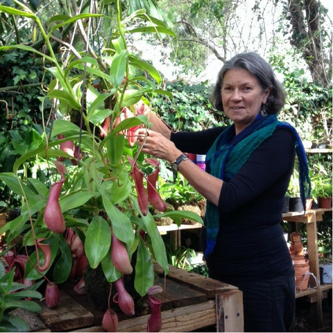 Sue checking in on some Carnivorous Pitcher Plants