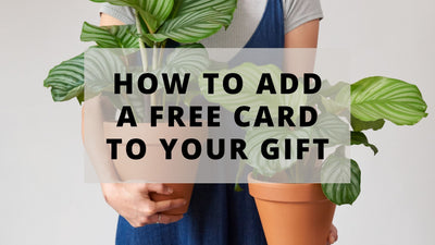 FREE GIFT CARDS AVAILABLE