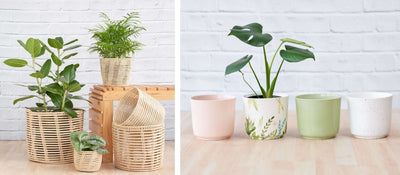 *New* Spring Planters