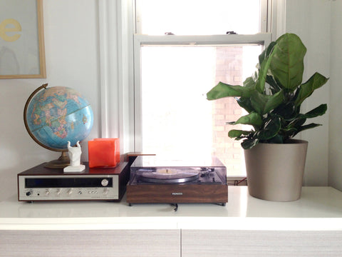 small fiddle leaf fig on desk