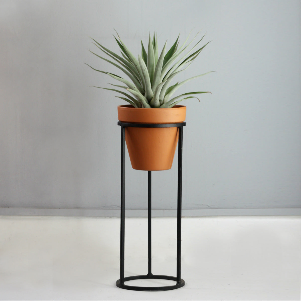Plant Stand - Double Circle