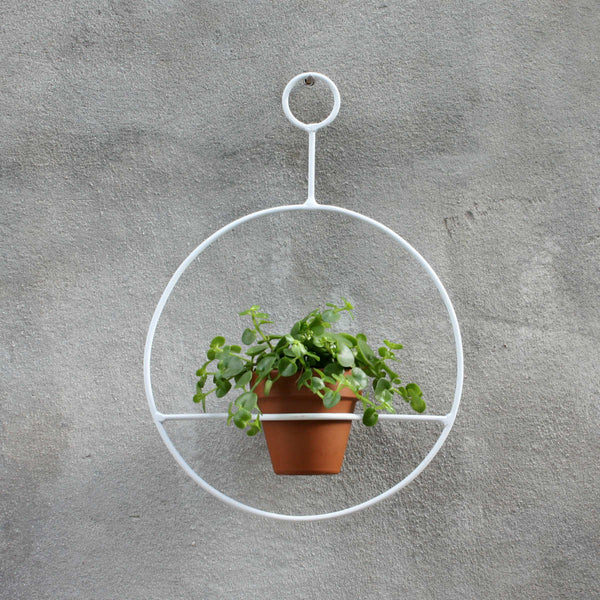 Circle Hanger - White with Dainty Crassula