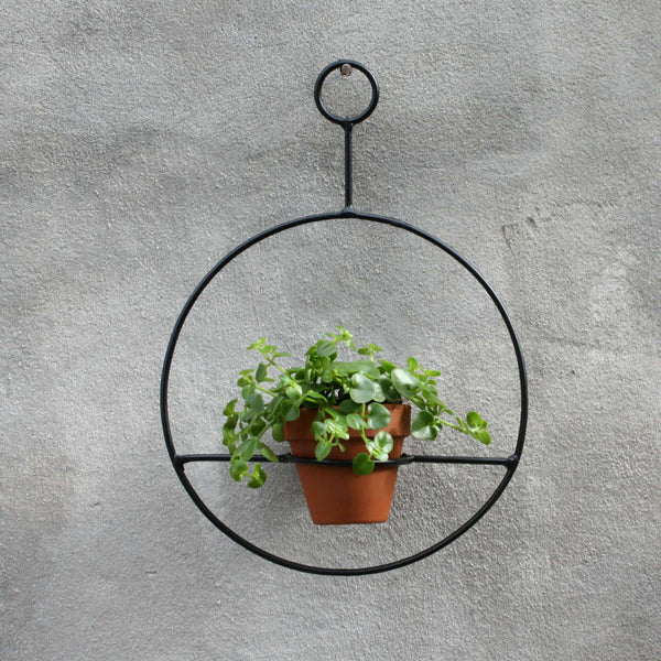 Circle Hanger - Black with Dainty Crassula