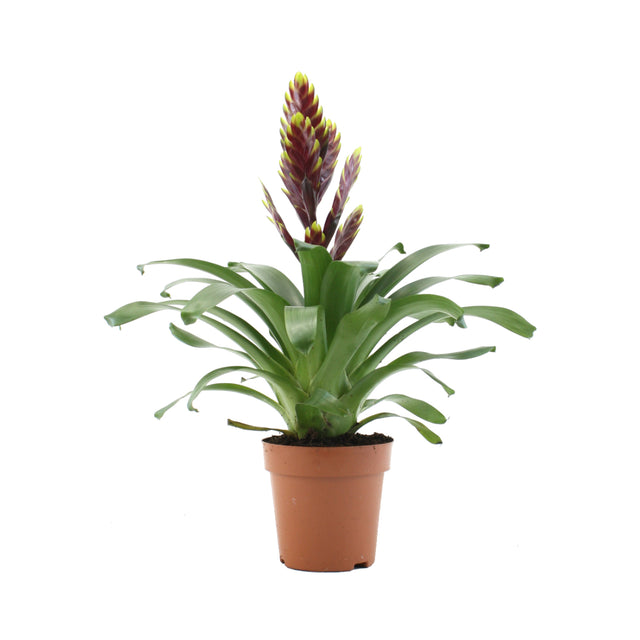 Indoor Plants - Care Easy, Waterwise, Low Light options on indoor plants for home, indoor plants-interior, indoor plants for christmas, indoor tulips, indoor gardening, indoor birds, indoor water plants on sale, indoor plants for aquarium,