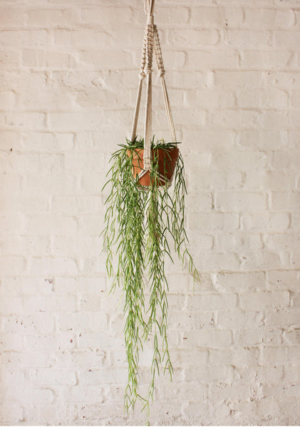 Hoya Linearis in Macrame Terracotta Set