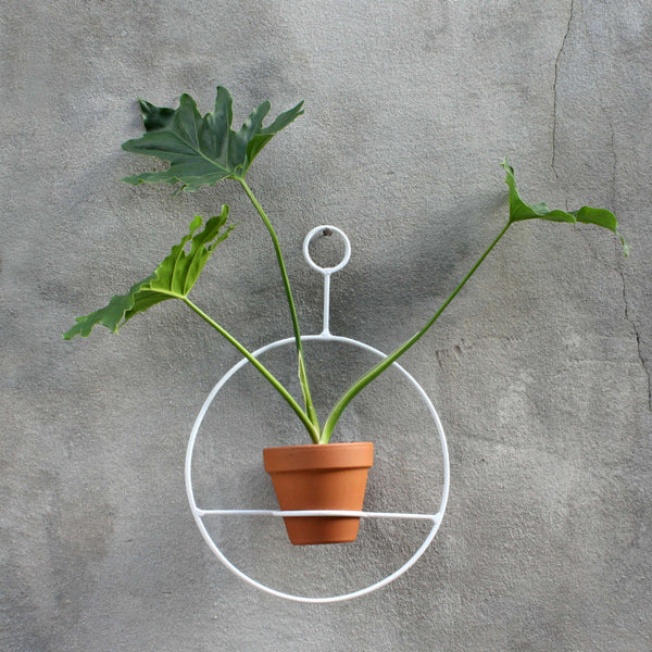 Circle Hanger - White with Philodendron