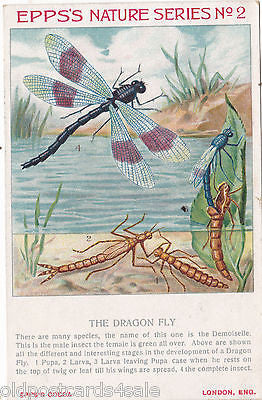 EPPS'S NATURE SERIES NO. 2 - DRAGON FLY - POSTCARD (ref 3863)