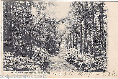 IN HARLOW CAR WOODS, HARROGATE - 1903 POSTCARD (ref 2248)