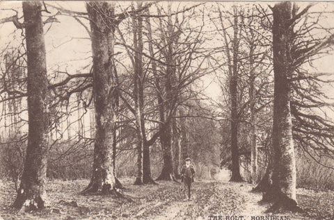 THE HOLT, HORNDEAN - 1910 POSTCARD (ref 2586/17)