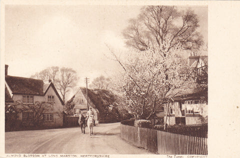APPLE BLOSSOM AT LONG MARSTON, HERTFORDSHIRE - OLD POSTCARD