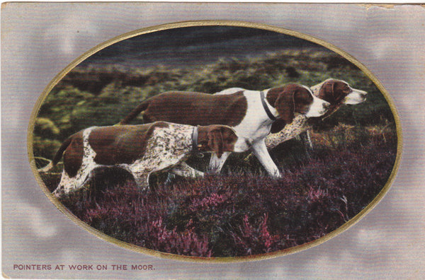 Pointers at work on the moor - dogs postcard