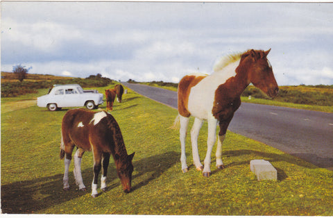 NEW FOREST PONIES - COLOUR POSTCARD - HAMPSHIRE (ref 4107/18)