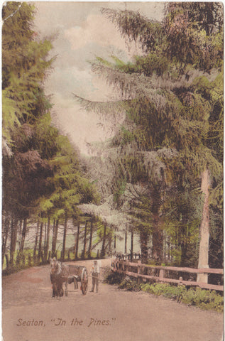 "Old postcard of Seaton, Devon, entitled ""In the Pines"""