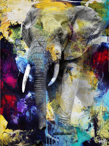 Colour Elephant