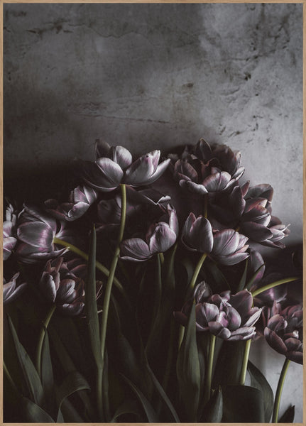 Dark tulips | POSTER BOARD