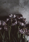 Dark tulips | PLAKAT
