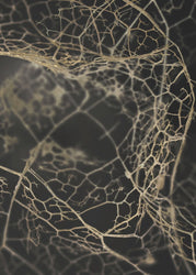 Leaf skeleton dark | PLAKAT