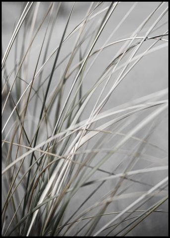 Mellow Grasses 1 | POSTER BOARD