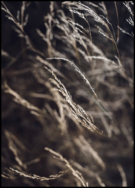 Mellow Grasses 7 | POSTER BOARD
