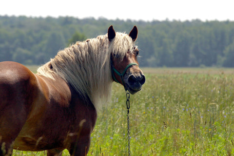 A look at carbohydrates in hay with the EMS horse in mind