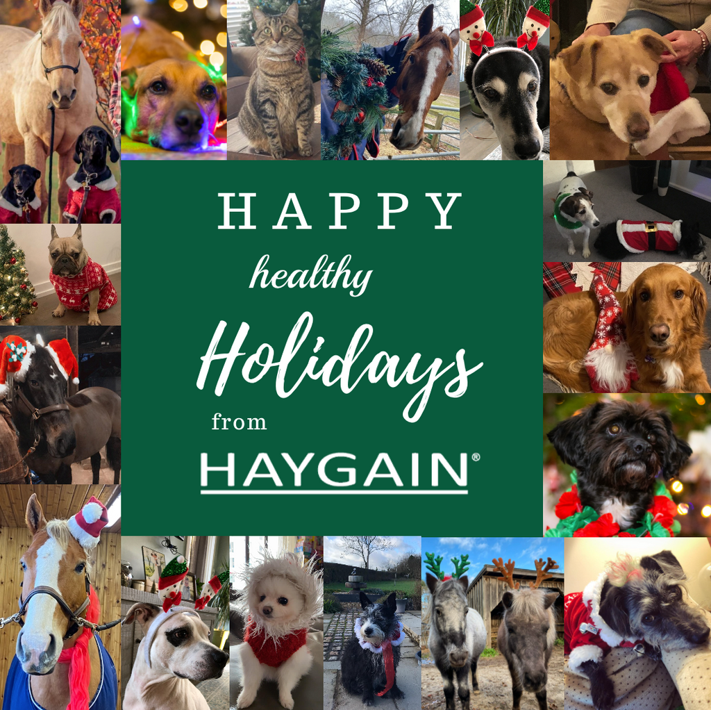 Happy, healthy Holidays from Haygain