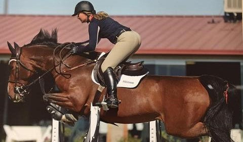 Classic Royal Z - Successful Equine Asthma Management Story