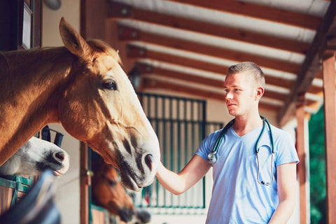 Equine Ulcers Behavior