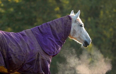 How horses stay warm