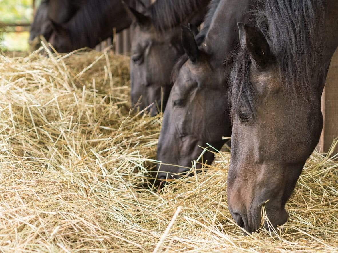 How do Haygain hay steamers fit into a busy barn routine?