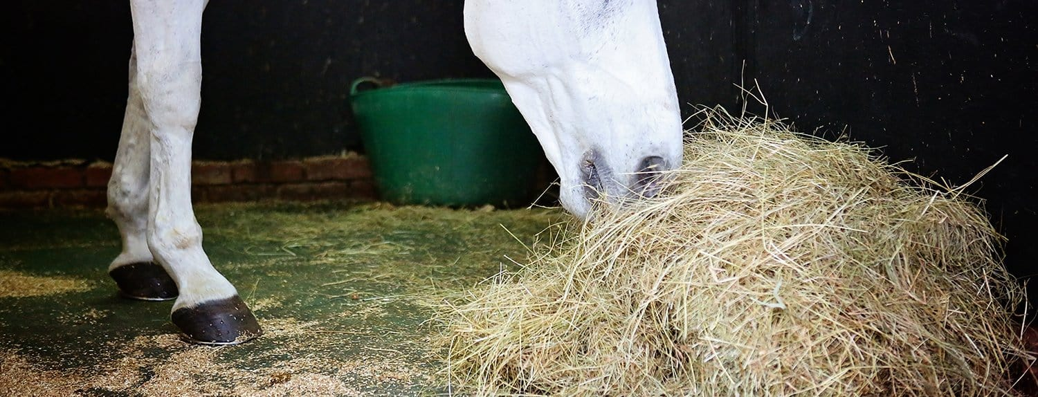 Fibre for the Performance Horse: Something to chew over