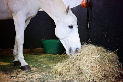 Fiber for the Performance Horse: Something to chew over