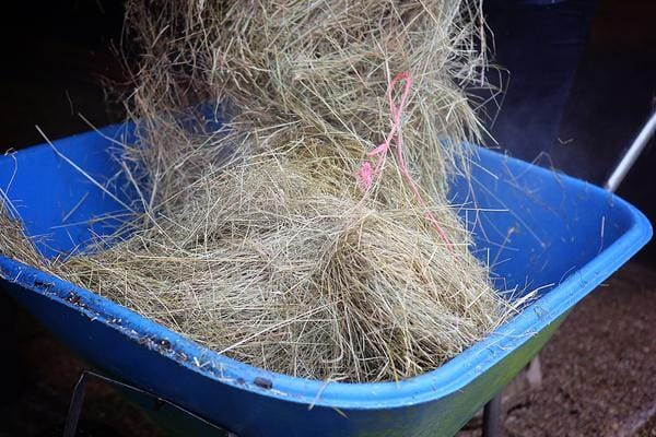 Part 3: Needle in a haystack? Getting to the bottom of forage analysis