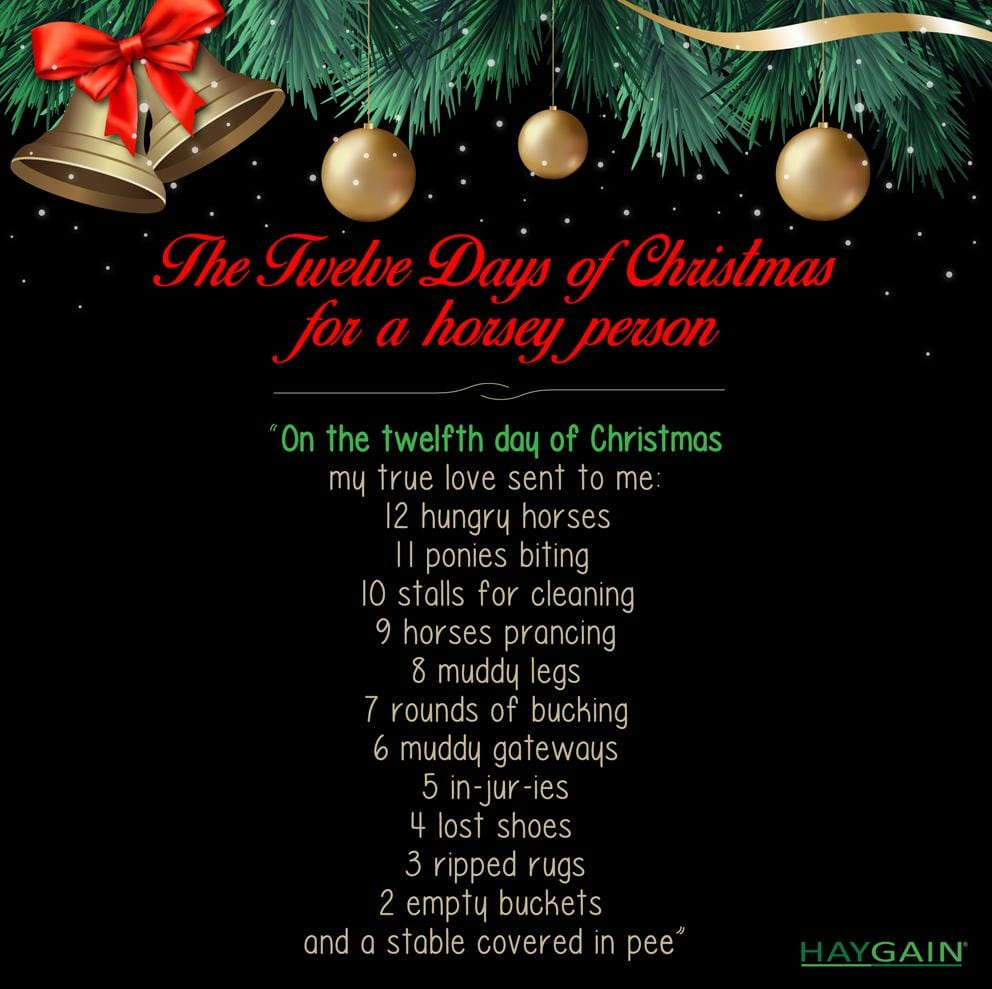 The 12 days of Christmas- for a horse owner!