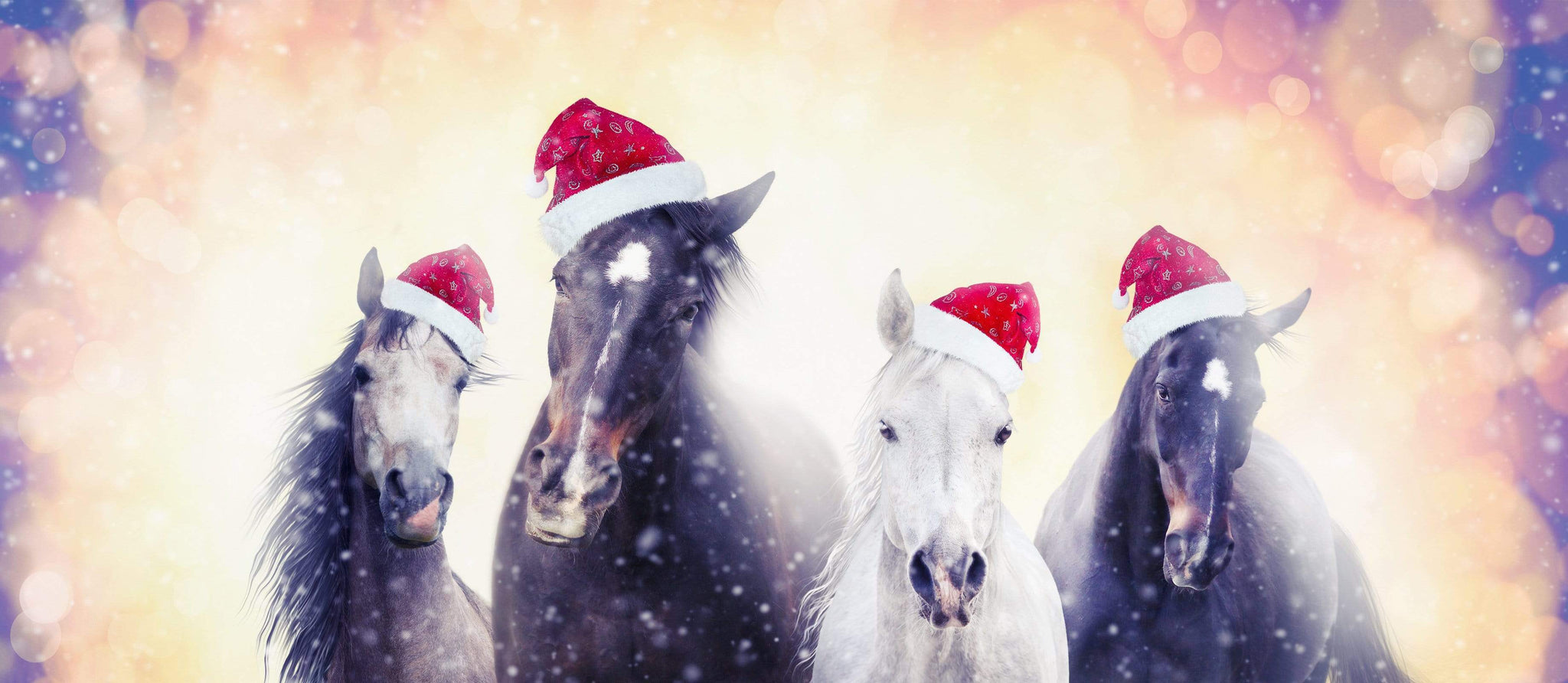 If Horses Could Write to Santa….
