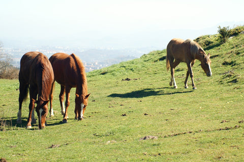 Natural grazing behaviour and the benefits