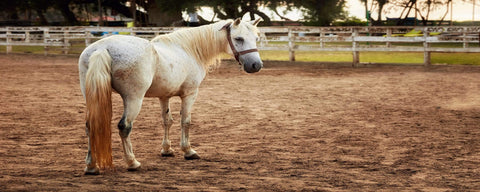 California and the challenges of keeping horses in arid climates