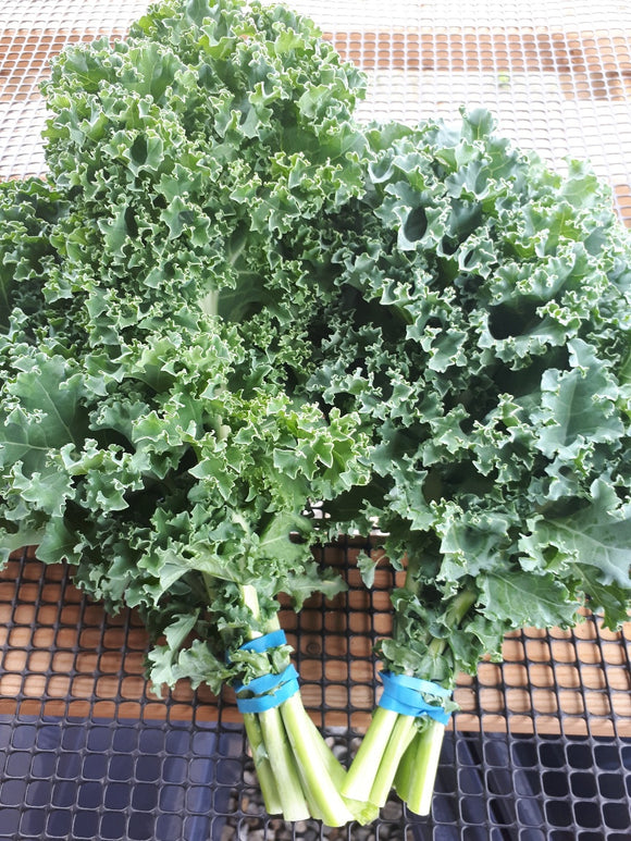 Kale - 2 Bunches - Organic