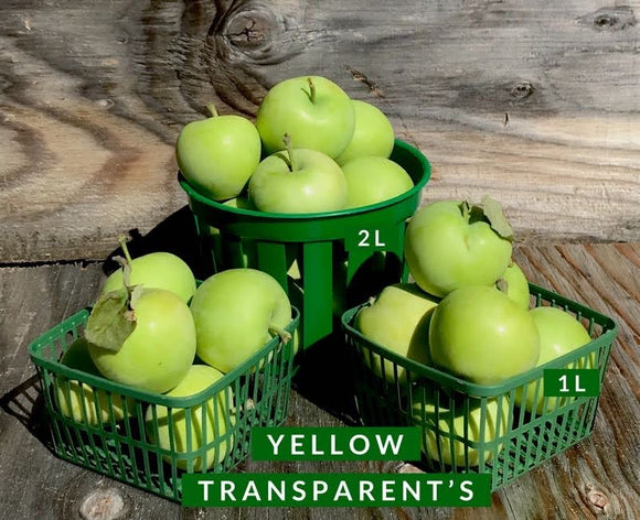 Yellow Transparent Apples