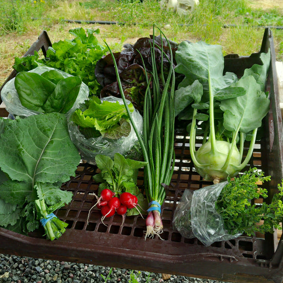 Large Produce Basket - Certified Organic