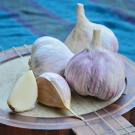 Garlic-Music - Organic