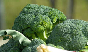 Broccoli - Foster Family Farm