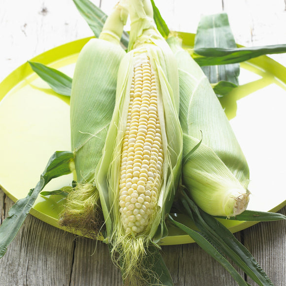 Sweet Corn - Foster Family Farm